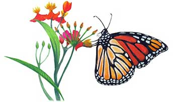 Graphic of butterfly gathering nectar from a flower