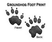Groundhog footpring