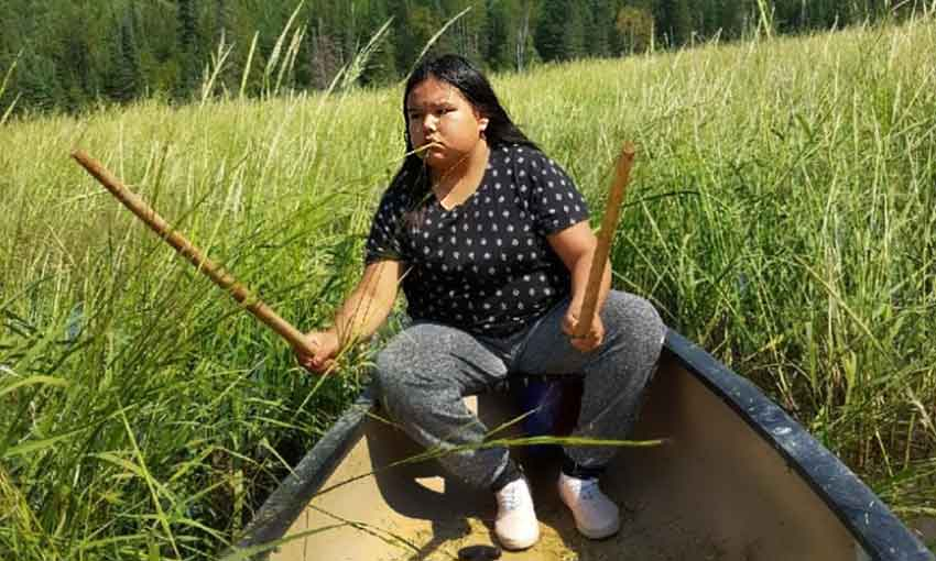 Ojibwe woman harvesting wild rice