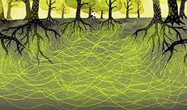 Wood Wide Web graphic of tangled forest