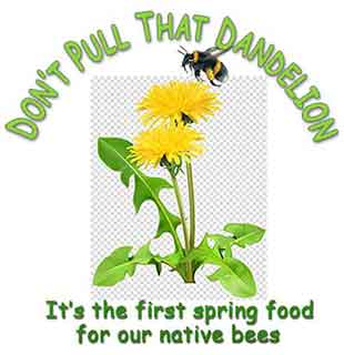 Don't Pull That Dandelion