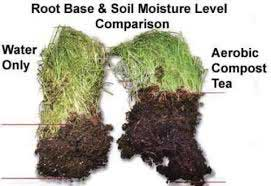 Comparison of plant roots grown with or without compost tea