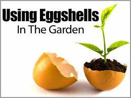 Use Eggshells in the garden graphic