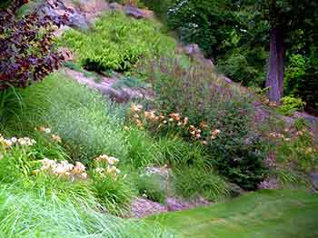Native plants used to stablize sloping garden