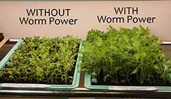 Results comparing plants with and without using vermiculture.