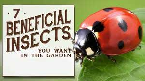7 Beneficial Insects