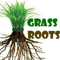 Grass Root structure