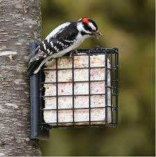 Suet Feeder with nesting materials
