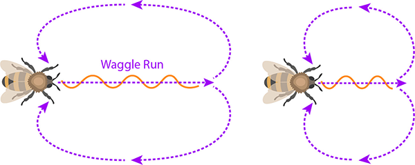Waggle Dance Run showing distance