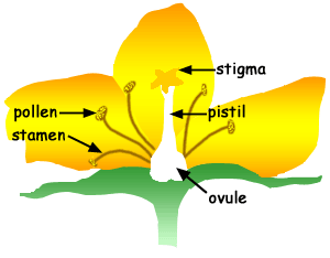 Graphic showing parts of a flower